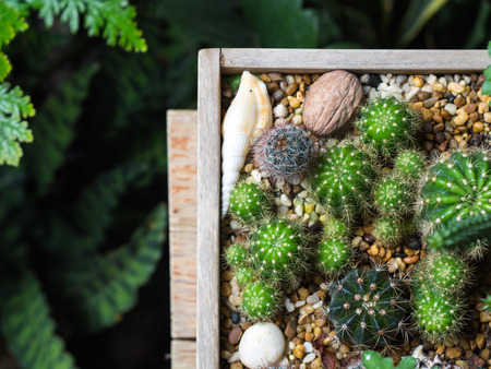Little Cactus in wooden tray in day light. Stock Photo