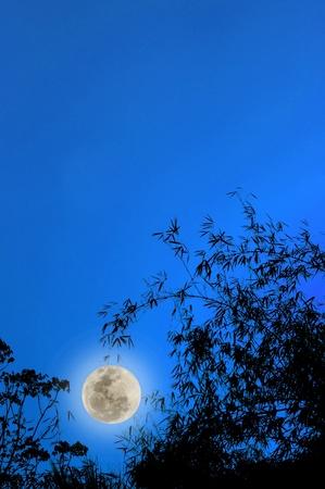 Full Moon Standard-Bild