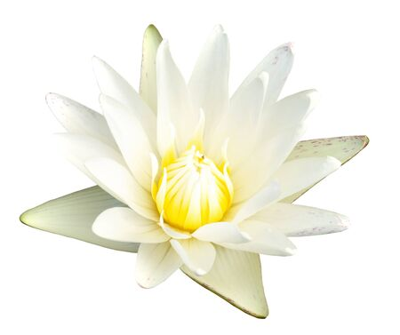 nymphaea:  White waterlily on white background with clipping path