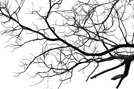 Bare tree branches isolated on white background
