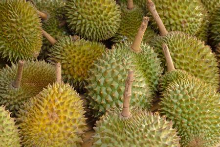 """Beschouwd door veel mensen in Zuidoost-Azië als de 'koning van de vruchten """", de durian is onderscheidend door zijn grote omvang, sterke geur, en formidabele-doorn bedekt bolster. Stockfoto"""