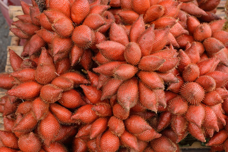 Salacca is a tropical Palm Fruit known as Sala in Thailand. Salacca or Sala grows in clusters at the base of the very short stemmed Salacca Palm Trees which are native to S.E. Asia.