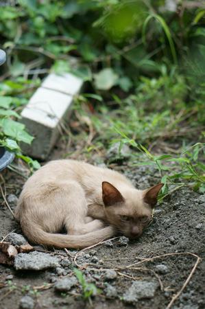Verdwaalde kat ging op de grond liggen met oplettende ogen