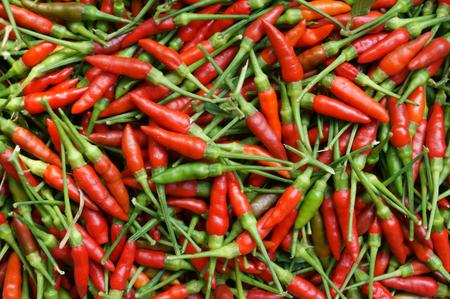 Bird chili background