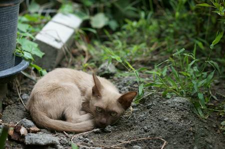 Stray-kat legt op de grond met voorzichtige ogen neer Stockfoto