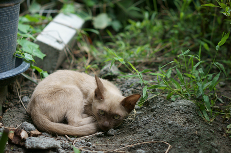 Stray cat lay down on the ground with wary eyes