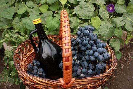 molly: Bottle of wine and grapes in basket