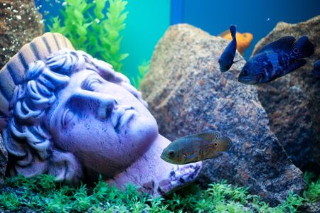 Ancient statue underwater. Fishes near photo