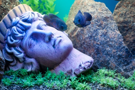 Ancient statue underwater. Fishes near Stock Photo - 10281624