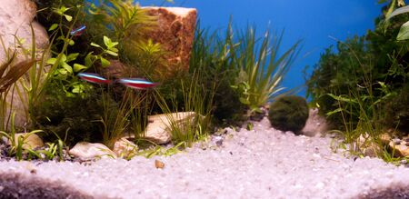 Speedy fishes underwater photo