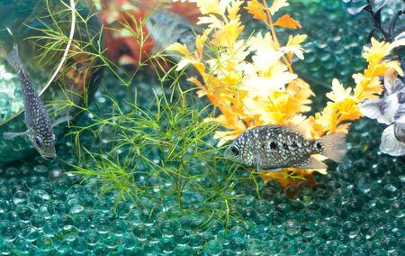 Gray fish and glass balls photo