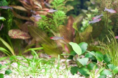 fishtank: Little fishes in fishtank with plants