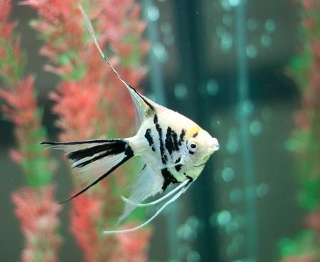 fishtank: Fish in fishtank