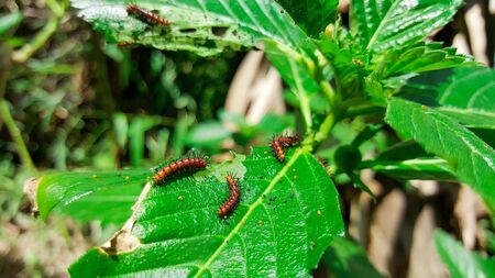 I vermi mangiano foglie verdi Archivio Fotografico - 91045167