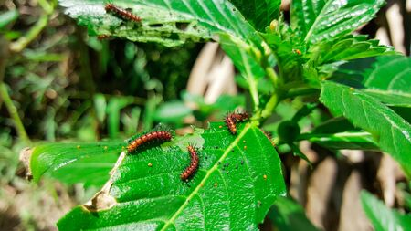 worms eat green leaves Stock Photo