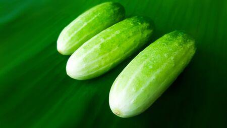 fresh green cucumber on banana leaf 写真素材
