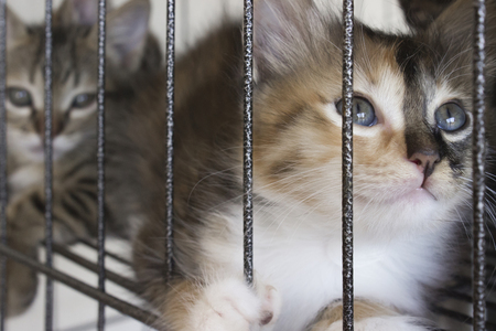 Kittens in cage.