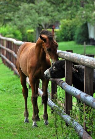 baby ass: Cure horse foal greets a donkey through a fence