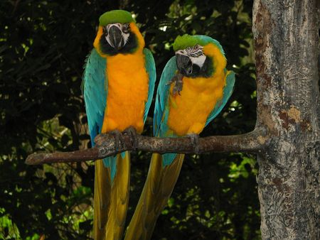 beck: a pair of parrots sitting on a branch