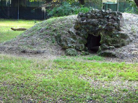 den: Cheetah den at a zoo