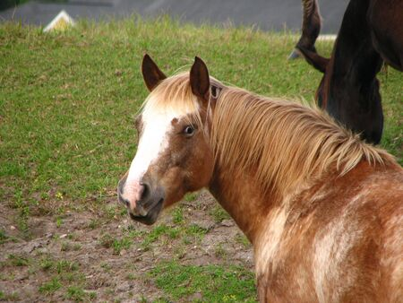 Benieuwd Paard Stockfoto