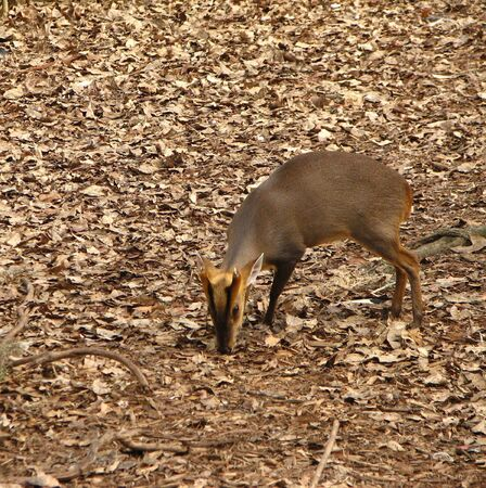 Deer feeding in the forest photo