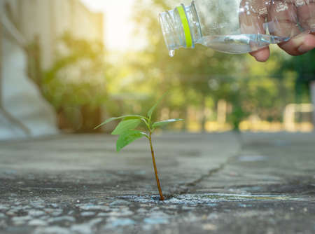Young plants on concrete should be treated like watering and growing. For a beautiful environment around the house