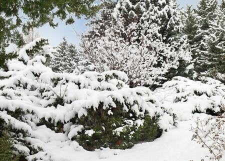 Les arbres couverts de givre et la neige dans le parc. Banque d'images - 11353629