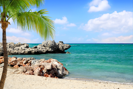 Tropical Beach with Palm Tree   Dragon Beach on Labadee, Haiti