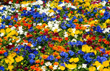 Background from blossoming colorful flowerbed in summer city park