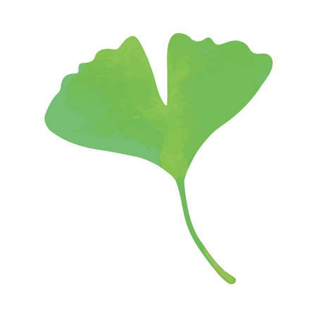 A single green ginkgo leaf. Watercolor painting