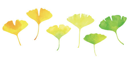 Six Ginkgo leaves. Watercolor, green to yellow gradation of color.
