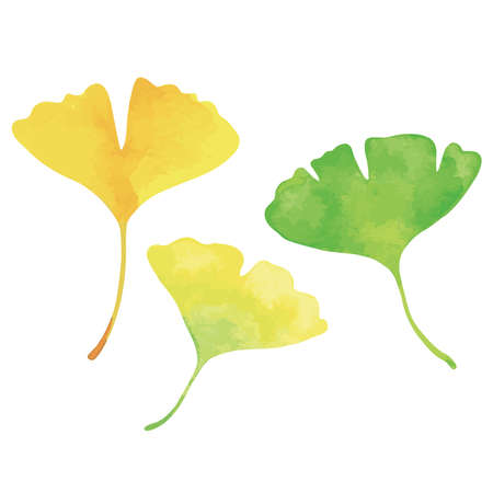 Three ginkgo leaves. Green, yellow and orange. Watercolor painting. 矢量图像