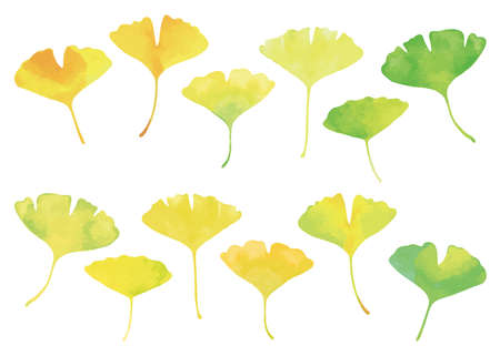 Ginkgo leaves set. Watercolor, green to yellow gradation of color.