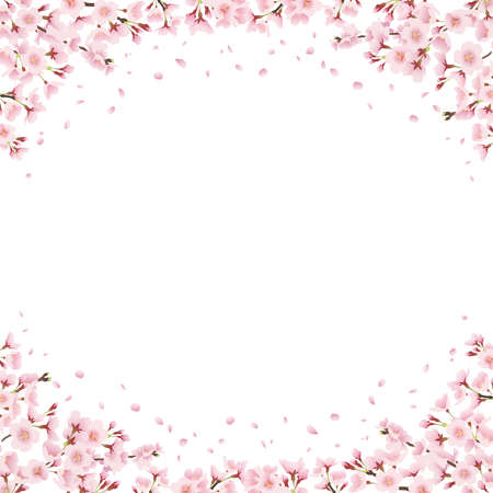 Cherry blossoms all around, landscape illustration looking up at cherry blossom trees Decoration, frame, decoration around (square) 向量圖像