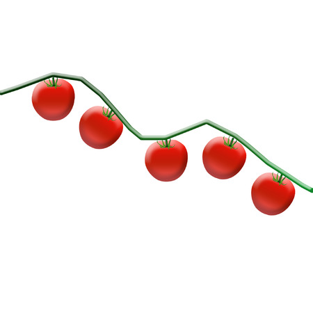 several ripe red tomatoes on a vine  Ilustração