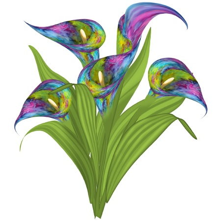 some pretty and colorful lilies