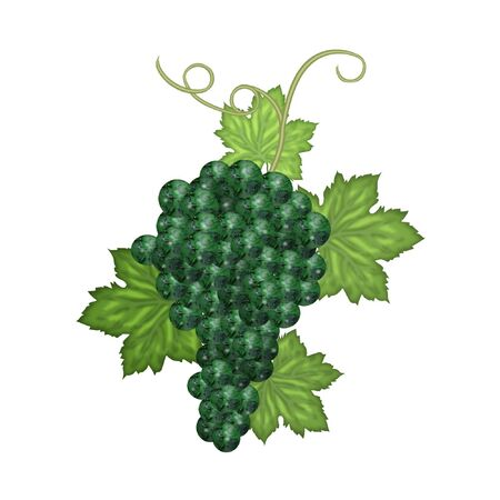 a pretty bunch of grapes and leaves