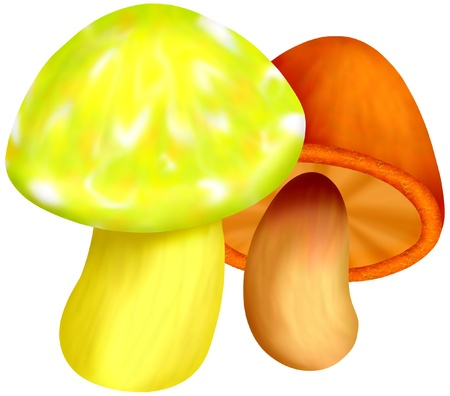 a couple of mushrooms in bright colors