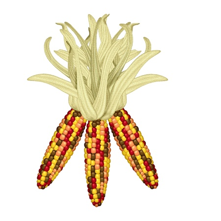 husk: indian corn done in bright colors