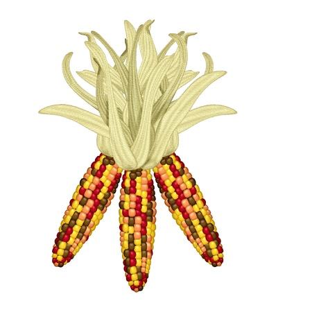 maiz: maíz indio hecho en colores brillantes