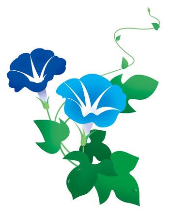 나팔꽃 꽃