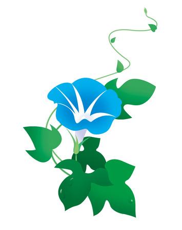 Morning glory flower Banco de Imagens