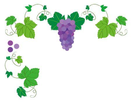 grapevine: Grape grapevine