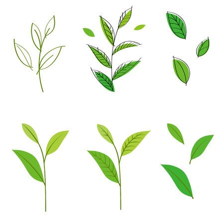 green plant: Tea leaf