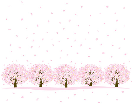 cherry trees: Row of cherry trees Illustration