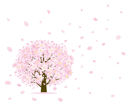 petal: Cherry tree and petal Illustration