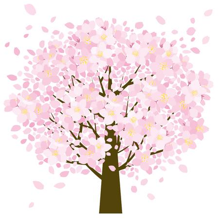 桜の木と花びら 写真素材