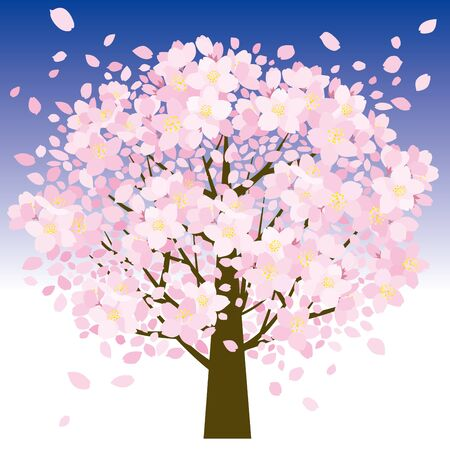 petal: Cherry tree and petal Stock Photo