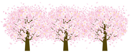 cherry trees: Cherry trees
